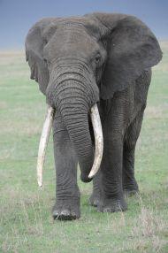 Tansania oder Kenia-